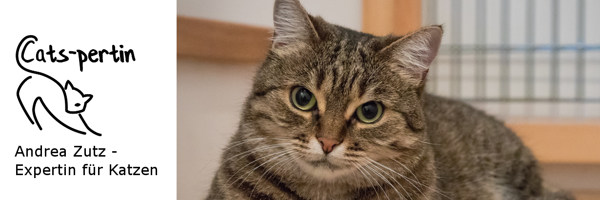 Andrea Zutz – Expertin für Katzen